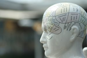 china model of a phrenology head